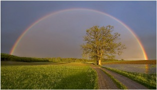 health corner - rainbow and tree